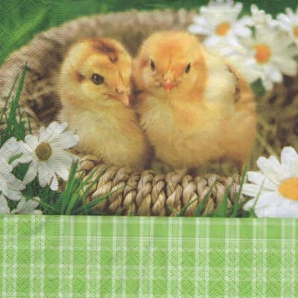 Serviette papier 2 poussins