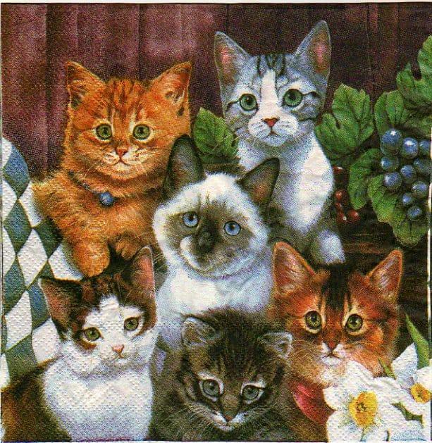 Serviette papier 6 chats 33 cm x 33 cm 2 plis