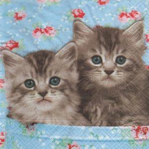Serviete papier 2 petits chats