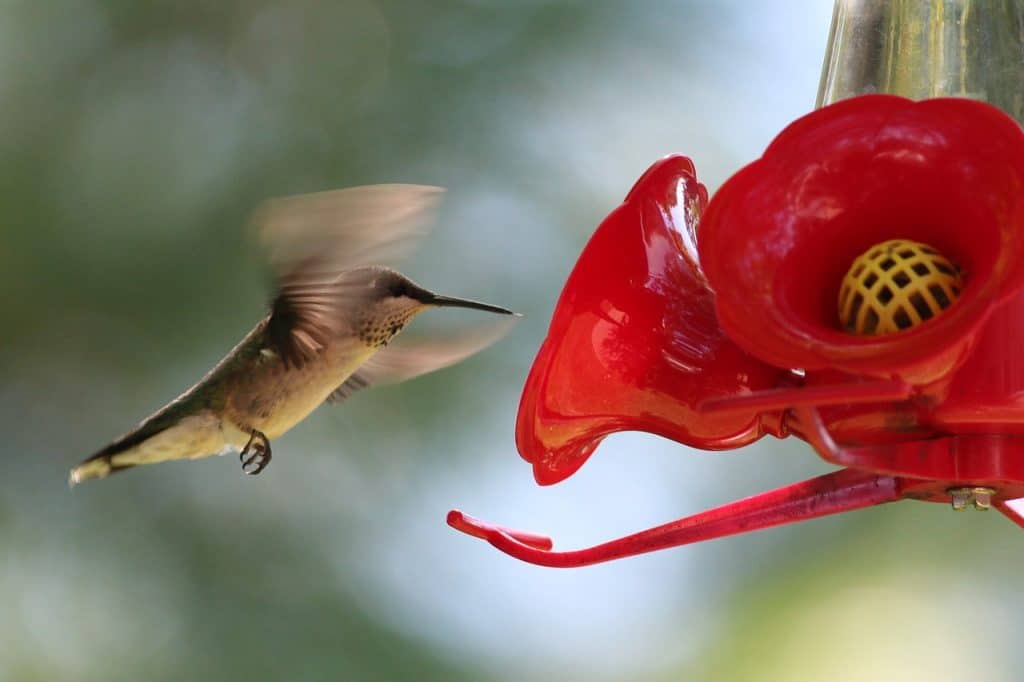 Mangeoire d'oiseau