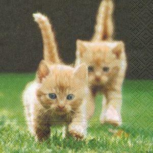 2 chatons serviette papier