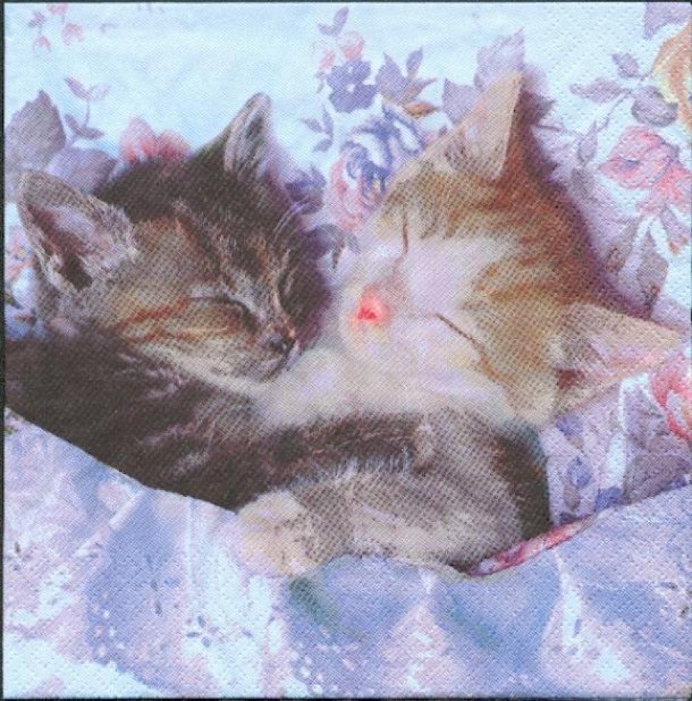 chat dormeur serviette papier
