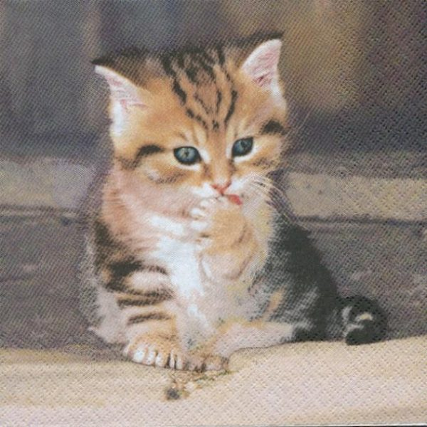 chaton brun serviette papier