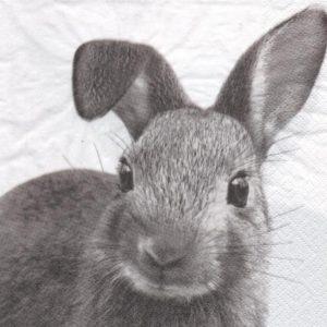 Serviette papier lapin gris