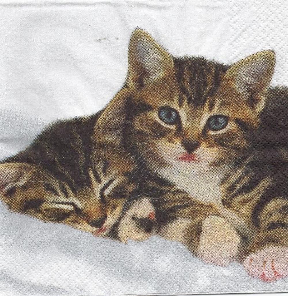 2 petits chatons serviette papier